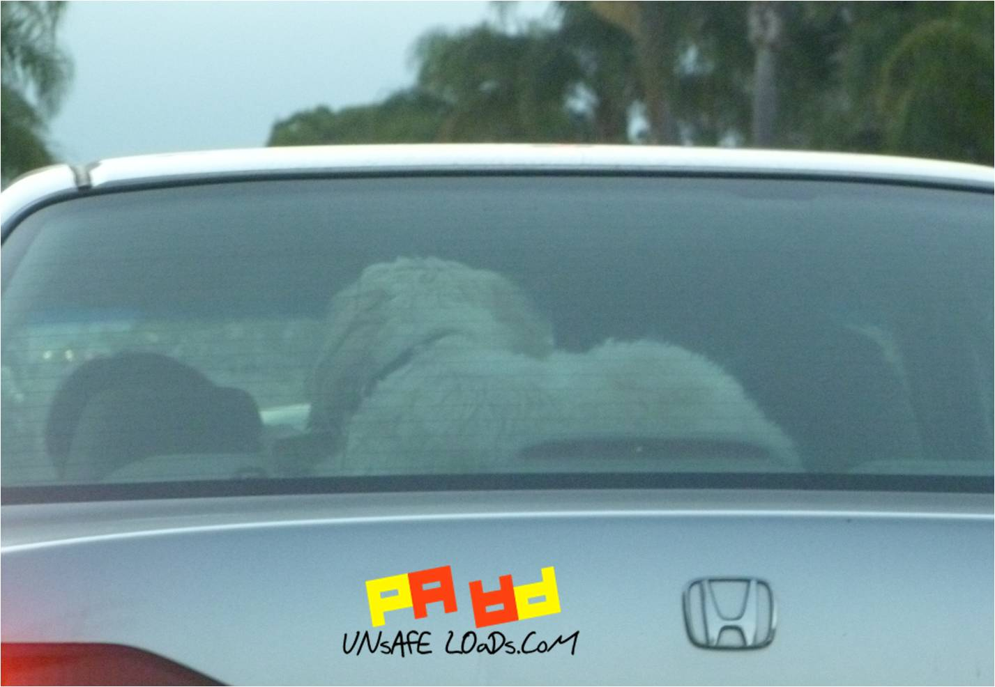 Dog rear window